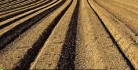 مواد غذایی - تولید ماد غذایی - تولید مواد پروتئینی - مواد پروتئینی - تولید مواد غذایی از برق - تولید مواد پروتئینی از برق - رشد میکروب - میکروب - بیورآکتور - رآکتور -انرژی تجدیدپذیر - انرژی خورشیدی - انرژی بادی -