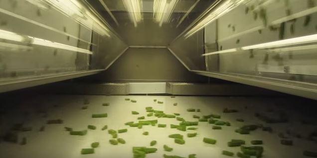 Genius 1600 - دستگاه سورتر - سورتر - دستگاه سورتینگ - سورتینگ Tomra - سورتینگ مواد غذایی - کالر سورتر - سورتینگ خرما - سورتینگ اسفناج - سورتینگ سیبزمینی - سورتینگ نخود فرنگی - sorting machine - sorter - Tomra sorting machine - صنعت سورت - عملیات سورتینگ - فرآیند سورتینگ -