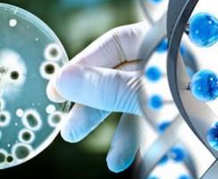 بیوتکنولوژی (Biotechnology) در صنعت غذا